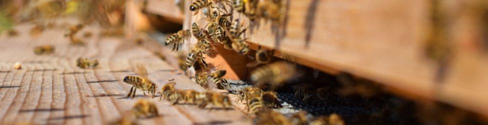 Když se nakonec naučíte včelám rozumět, vaše včely se změní.