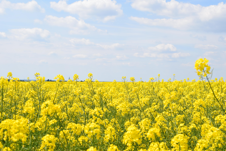Pesticidy působí na včely jako drogy: jsou na nich závislé!