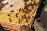 Zdravotní stav včelaře