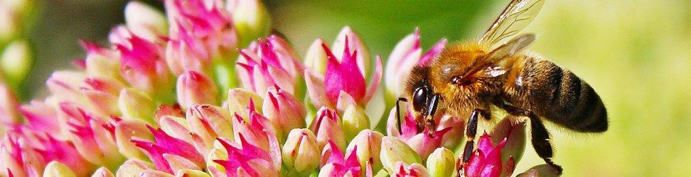 Na světě jsou dvě největší záhady života, člověk a včely. Starší jsou včely.
