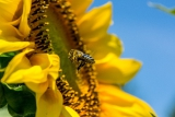 7. O VČELÁCH, ROSTLINÁCH A PLODECH