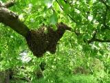 Včelařství nikomu neškodí...