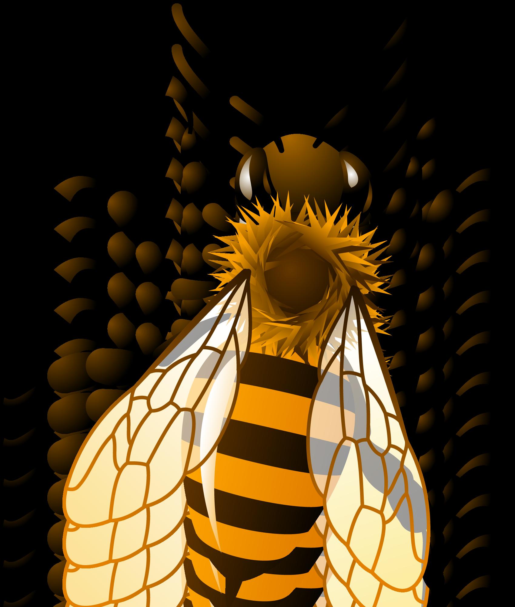 Takto nějak budou vypadat úkoly a testíky pro Vás včelaříky - kdo by chtěl ale zkusit testík přímo tady na stránkách, popojeď níže