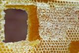 Složení medu...