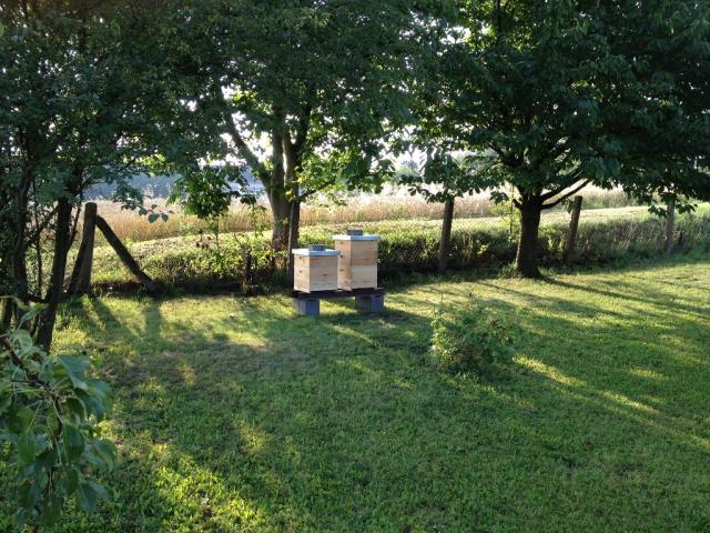 Informace k pokračování včelařského kroužku pod ZŠ Dohalice