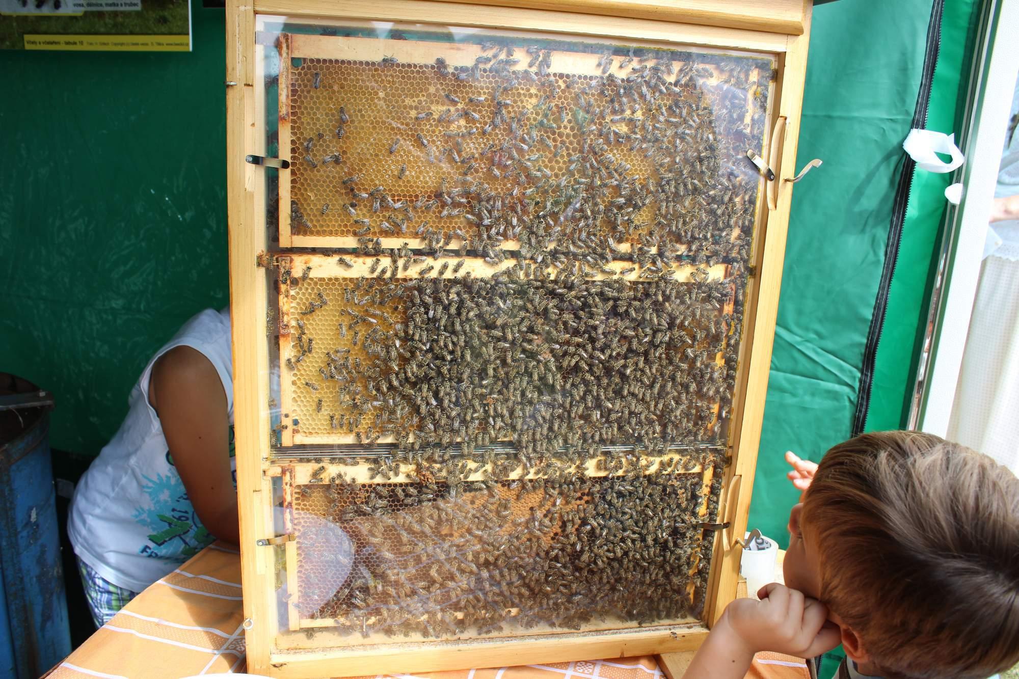 Prosklený ukázkový úl